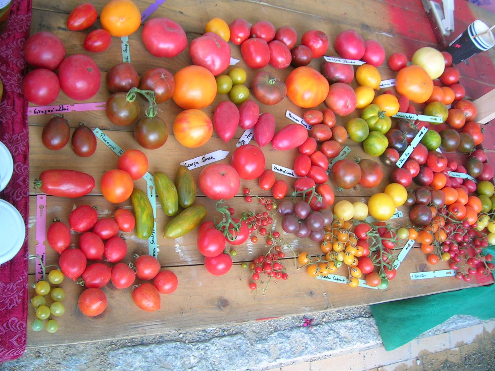 Tomaten-tomate