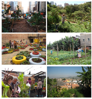 sued-amerikanische-gärten