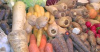 sortenvielfalt bei Wurzel Gemüse